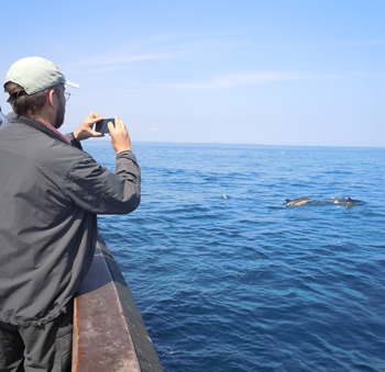 Photographing dolphins