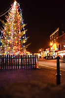A tree-junction in Kinsale, Christmas 2011.