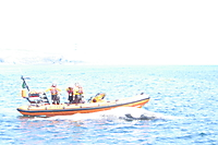 Drifting minke whale carcass.