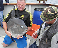 Ocean sunfish on deck