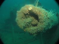 Underwater image #2